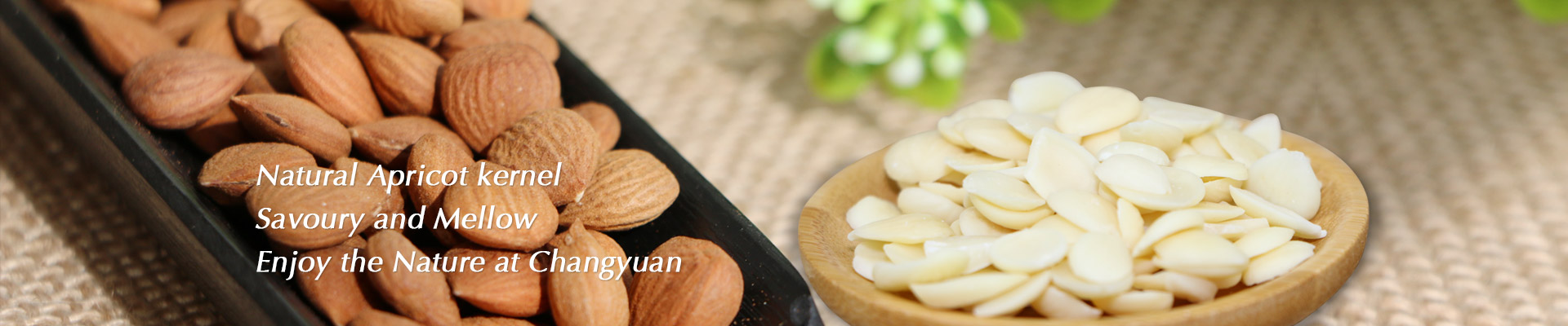 Zhagjiakou Yongchangyuan Kernel Food Co.,Ltd